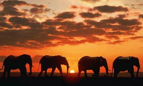Couverture éléphant