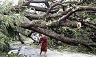 A monk makes his way past a fallen tree following the cyclone in Burma
