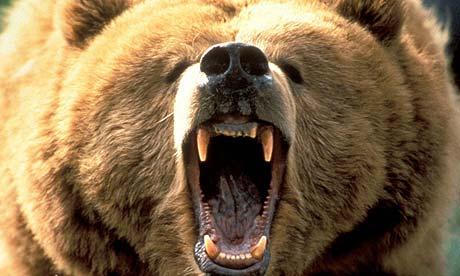 bear10b.jpg