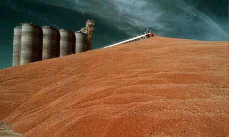 A grain elevator in Illinois. In 2009, 107m tonnes of grain was grown by US farmers to be blended with petrol. Photograph: AP Photo/Monty Davis