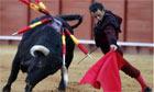 Bullfight: Matador performs a pass on a bull
