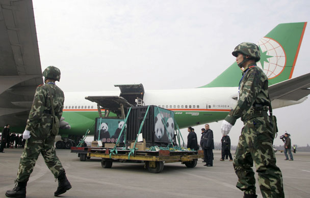 Security personnel escort the cages containing two Panda bears at the airport