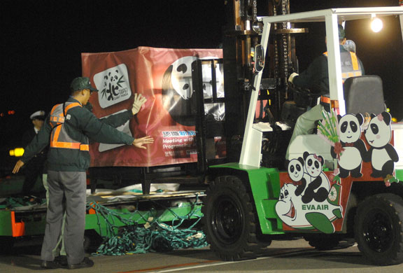 A forklift unloads a carton containing a giant panda from a charter jet upon its arrival at Taoyuan airport, northern Taiwan