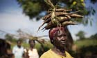 Edith Acengo carries cassava tubers back to her camp in Katine