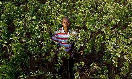 Cassava farmer Moses Julius Otim with his new resistant strain of cassava.