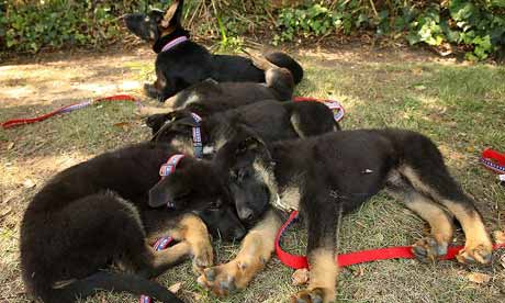 Five puppies cloned from Trakr