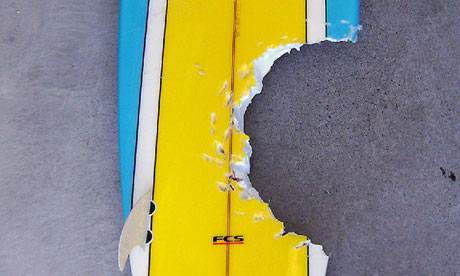 a surfboard which had  a bite taken out of it by a shark in Binalong Bay