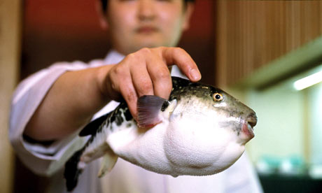 The fugu pufferfish - highly poisonous if inexpertly prepared.