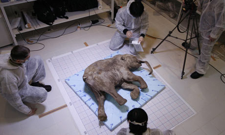 Scientists perform an autopsy and DNA analysis on Lyuba, a wooly mammoth.