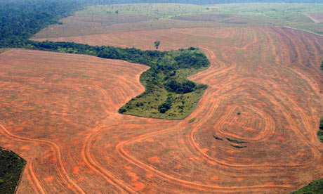 Deforestation in Novo