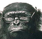 Chimpanzee wearing spectacles: Ask Carole