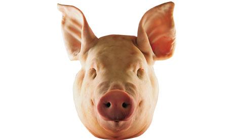 Pigs-head-001.jpg