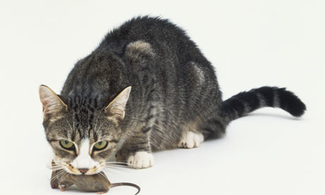 Cat with mouse Researchers plan to use GPS devices to follow domestic cats.