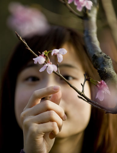 Taiwan flower festival: Taiwan cherry blossom