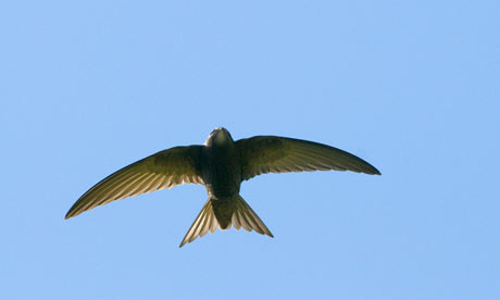 Swift in action