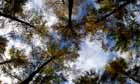 Mortimer Forest, Ludlow, Shropshire