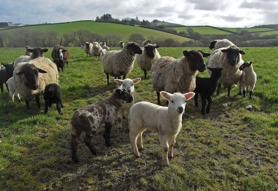 http://static.guim.co.uk/sys-images/Guardian/Pix/pictures/2009/3/17/1237300953718/Signs-of-Spring-Lambs--010.jpg