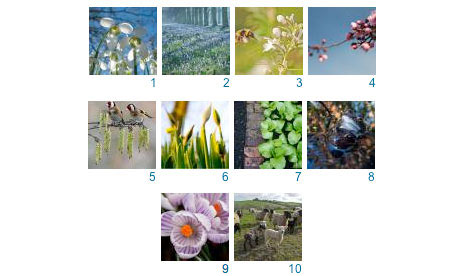 A mosaic of the best photos from the Signs of Spring Flickr group