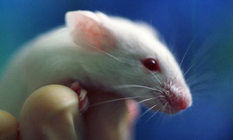 Laboratory mouse in a scientist's hand