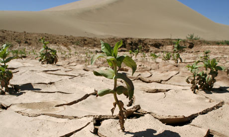 Plants grow in an oasis next to the desert in Dunhuang, Gansu province,