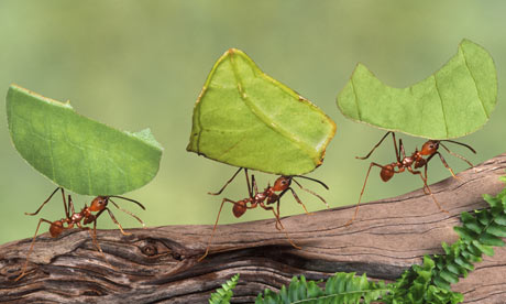 Working ants - photo#7