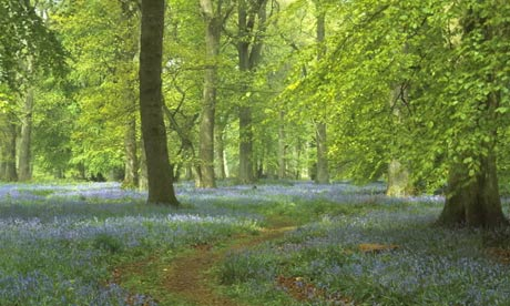 The Forest of Dean is England's first national forest park