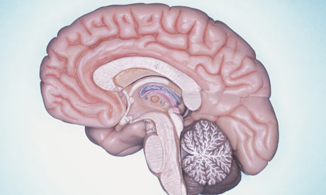Cross section of the human brain
