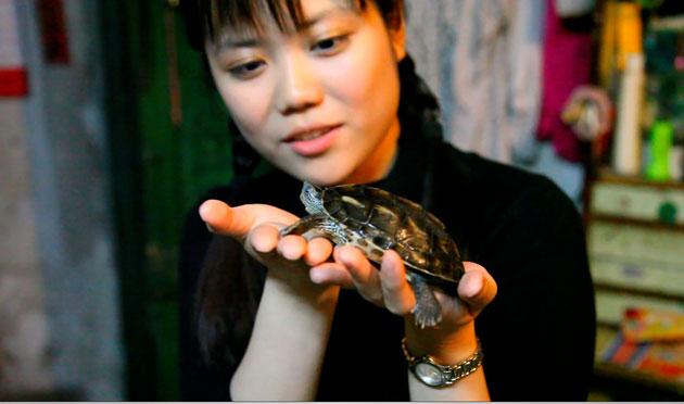 china  animal
