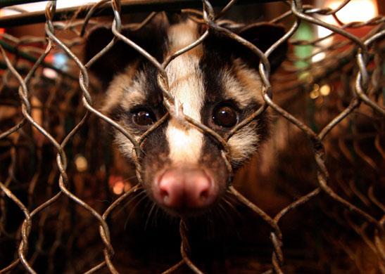 [图说] 中国:活体动物市场一瞥