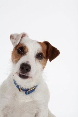 Battersea Dogs Home Windsor