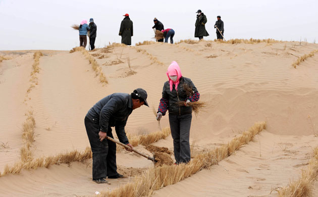 Minqin China: China - Gansu - Afforestation