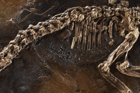 Ida missing link fossil: The stomach contents of Ida, a primate fossil