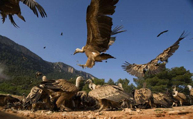 Imágenes bellas ¿Cuál te gusta más? Week-in-wildlife-Hundreds-007