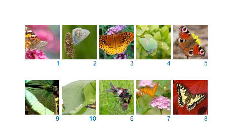 A mosaic of our favourite butterfly photos taken by Guardian readers