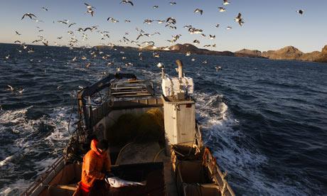 Уловы исландских рыбаков в январе 2015 выросли на 47 %
