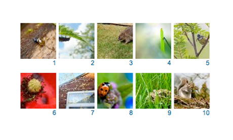 10 Shortlisted images for Garden wildlife photography competition 2009