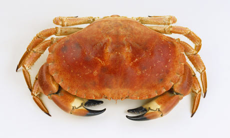 tim hayward how to cook and dress a crab life and style guardian how to cook crab 460x276
