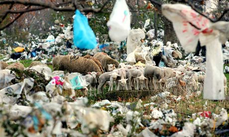 sheep and plastic bags