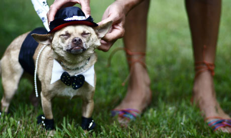 A dog at a wedding in Tennesee