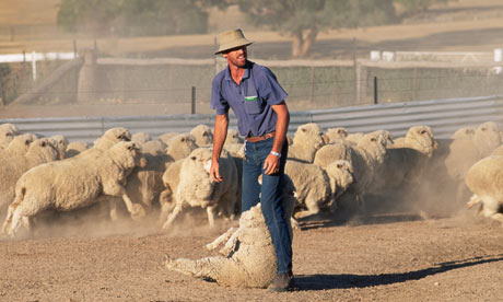 australian sheep farmer