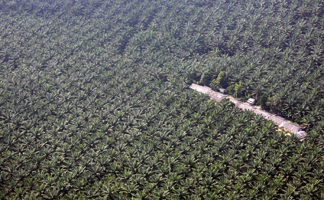 印尼苏门答腊岛森林面积减少了六成(上)
