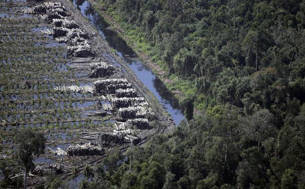 印尼苏门答腊岛森林面积减少了六成(下)