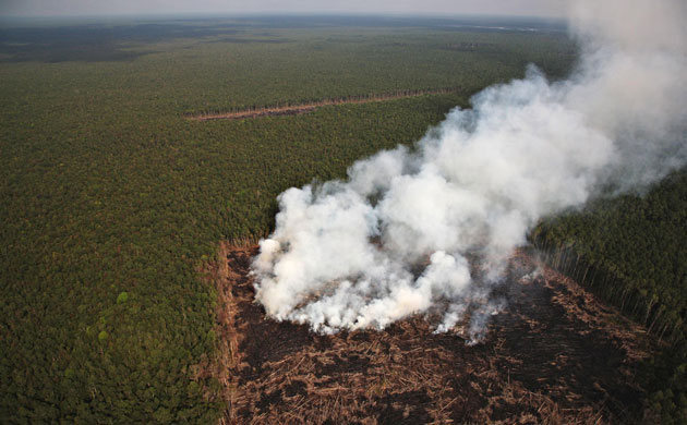 Deforestation on Sumatra: Indonesia, Riau province,