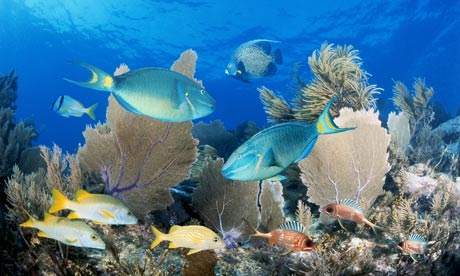 Florida Keys Reef Fish Identification http://www.guardian.co.uk/environment/2010/jan/07/coral-reefs-new-species