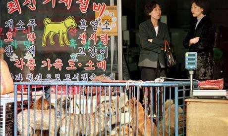Dogs-for-sale-in-south-ko-001