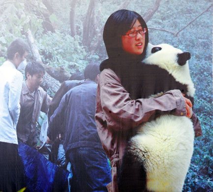 Giant Panda | SweetRiver