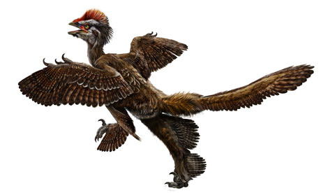 Feathered dinosaur Anchiornis huxleyi