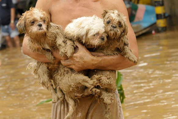 Philippines floods: A Filipino resident holds his pet dogs, trapped by floods