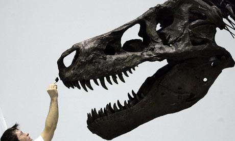 Tyrannosaurus rex (T. rex) Sue