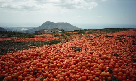 [Image: Food-waste-Surplus-tomato-003.jpg]